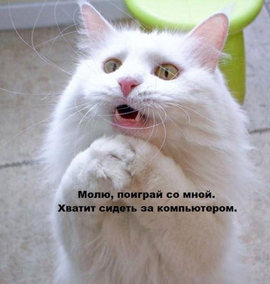 Прикольные картинки с животными с надписями - ржачные, веселые, смешные 8