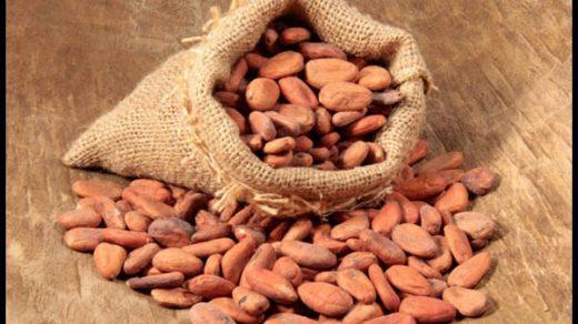 Кедровые орехи - настойка на водке, лечебные свойства, противопоказания 1