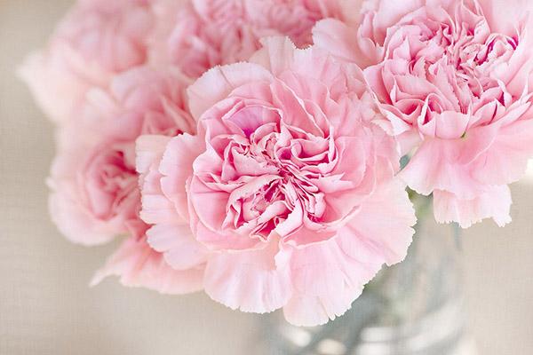 Красивые и прикольные цветы фото, картинки, смотреть бесплатно 5