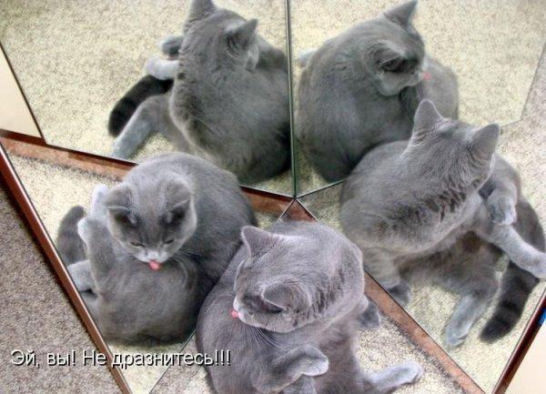Прикольные картинки с животными с надписями - ржачные, веселые, смешные 9