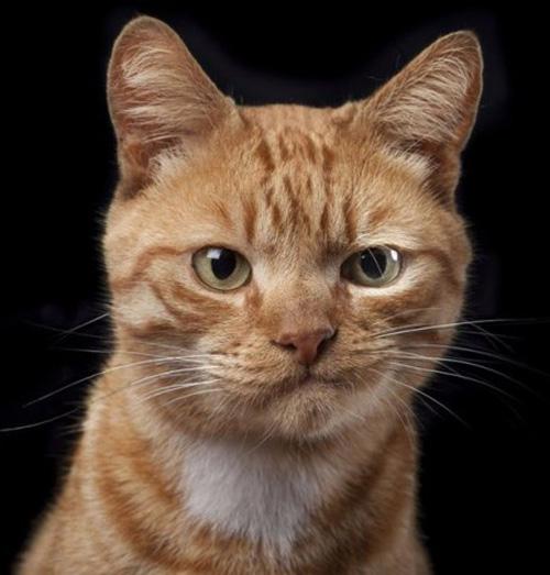 Смешные коты - фото, картинки, ржачные, веселые  13