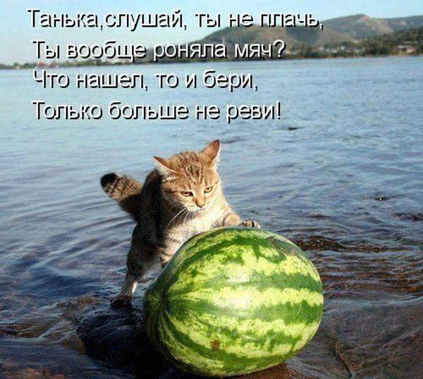 Прикольные картинки с животными с надписями - ржачные, веселые, смешные 10