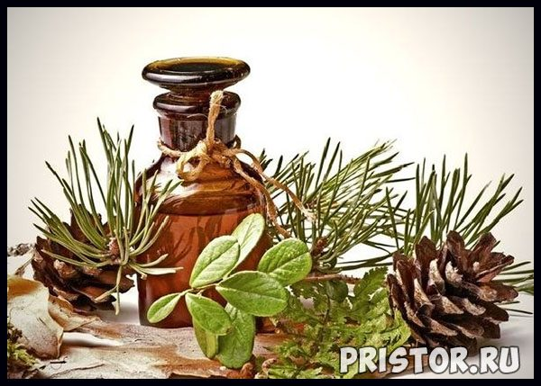 Кедровое масло - лечебные свойства и противопоказания, применение 2