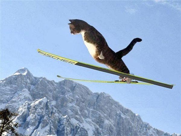 Смешные фото про котов - ржачные, веселые, прикольные 18