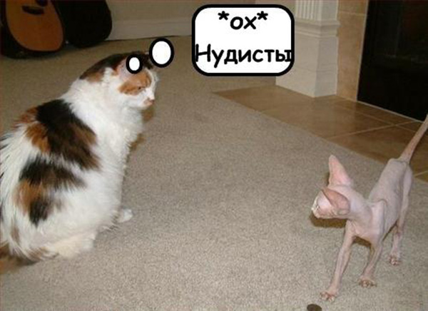 Прикольные картинки с животными с надписями - ржачные, веселые, смешные 12