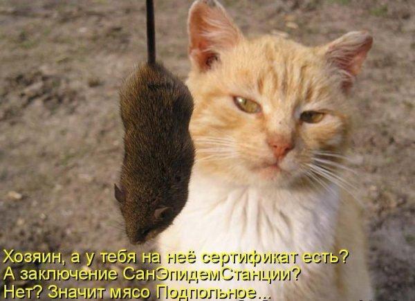 Прикольные картинки с животными с надписями - ржачные, веселые, смешные 14