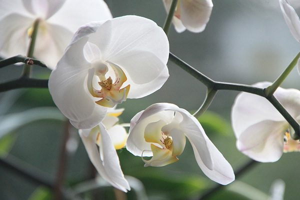 Красивые и прикольные цветы фото, картинки, смотреть бесплатно 7