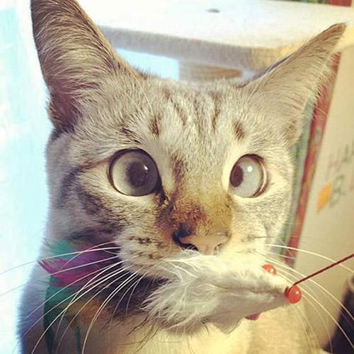 Смешные коты - фото, картинки, ржачные, веселые 17