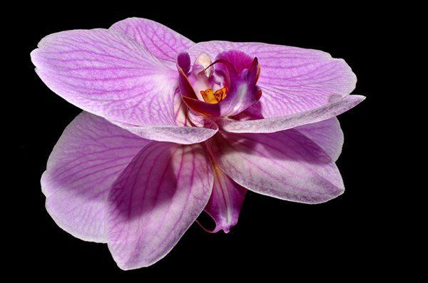 Красивые и прикольные цветы фото, картинки, смотреть бесплатно 8