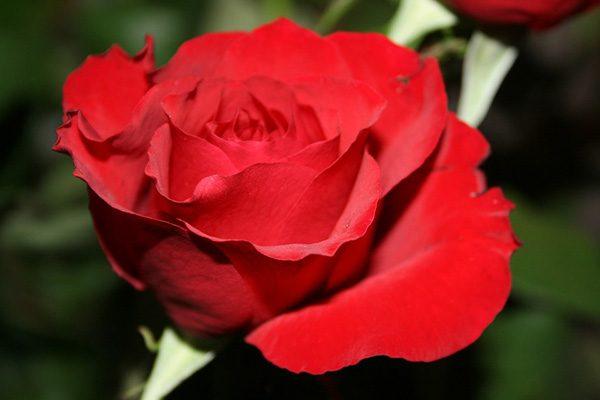 Красивые и прикольные цветы фото, картинки, смотреть бесплатно 9