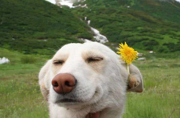 Самые смешные фотки людей и животных - веселые, прикольные 6