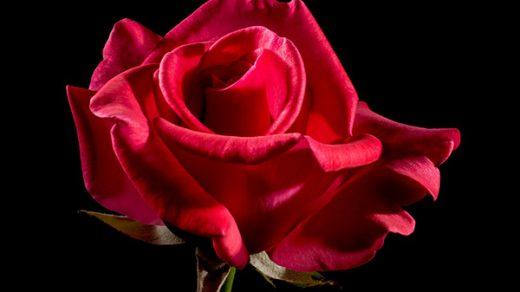 Красивые и прикольные цветы фото, картинки, смотреть бесплатно 10