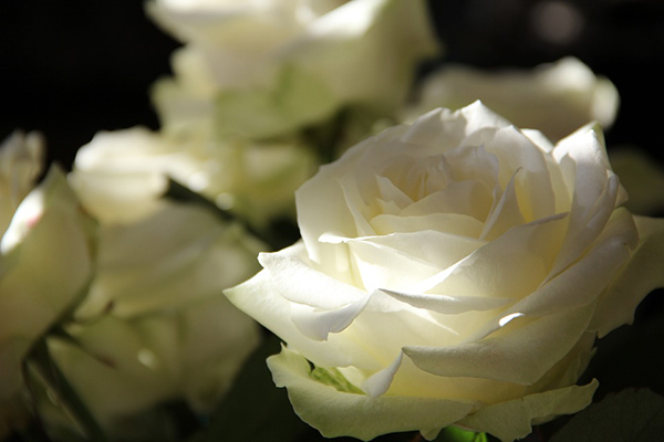 Красивые и прикольные цветы фото, картинки, смотреть бесплатно 12