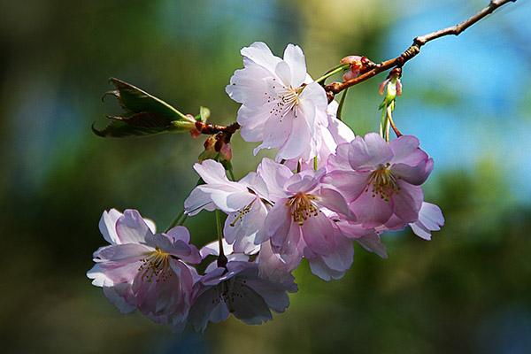Красивые и прикольные цветы фото, картинки, смотреть бесплатно 14