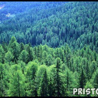 Тайга характеристика природной зоны - растительный и животный мир 5