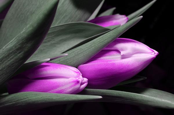Красивые и прикольные цветы фото, картинки, смотреть бесплатно 15
