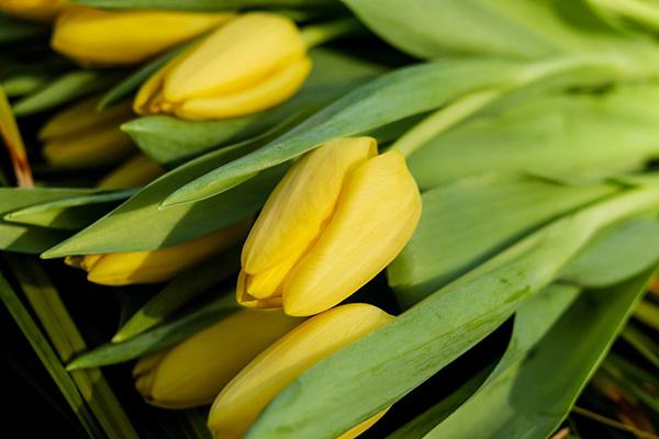 Красивые и прикольные цветы фото, картинки, смотреть бесплатно 17