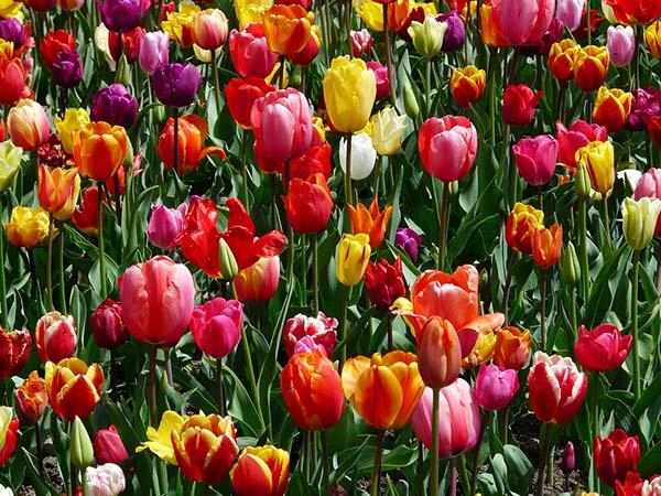Красивые и прикольные цветы фото, картинки, смотреть бесплатно 16