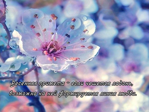 Цитаты про весну и любовь - красивые, удивительные, со смыслом 8
