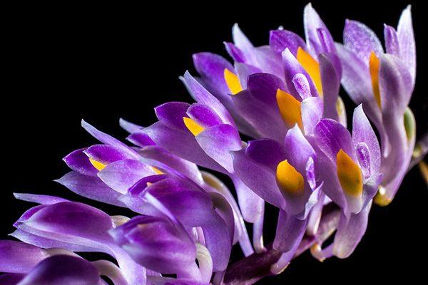 Красивые и прикольные цветы фото, картинки, смотреть бесплатно 18