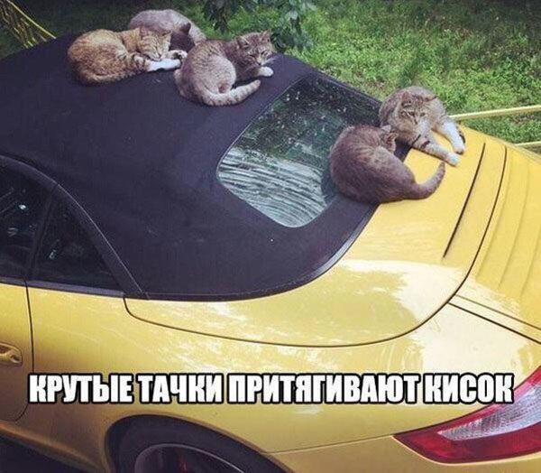 Автомобильные приколы - смешные, веселые, прикольные 7