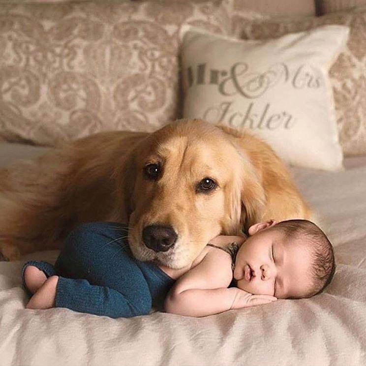 Веселые и смешные фото детей и животных - смотреть бесплатно 10