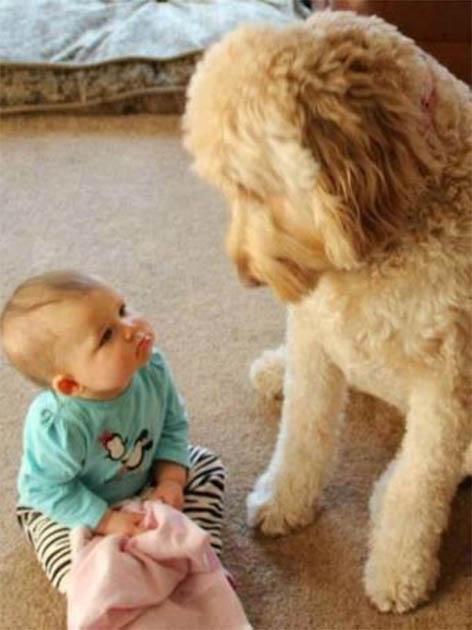 Веселые и смешные фото детей и животных - смотреть бесплатно 11