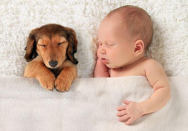 Веселые и смешные фото детей и животных - смотреть бесплатно 4
