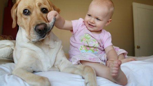 Веселые и смешные фото детей и животных - смотреть бесплатно 7