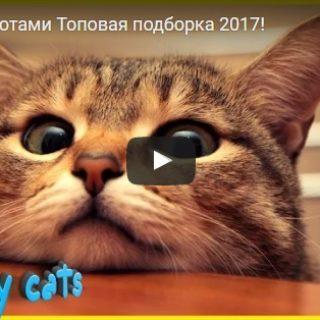 Видео про котов - смешное до слез, прикольные, веселые