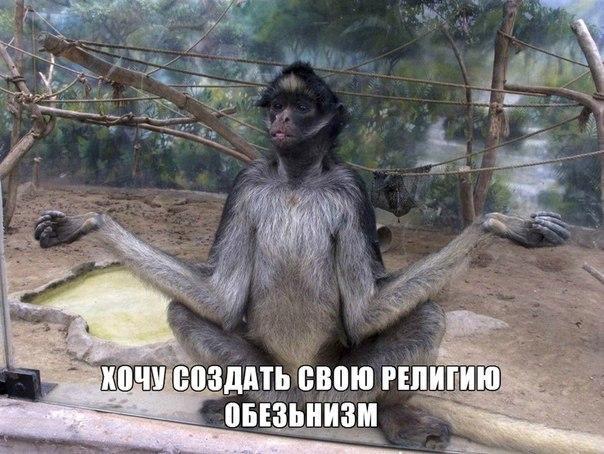 Забавные и смешные фото животных с надписями - смотреть бесплатно 10