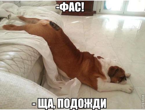 Забавные и смешные фото животных с надписями - смотреть бесплатно 11