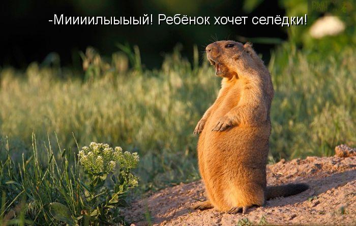 Забавные и смешные фото животных с надписями - смотреть бесплатно 15