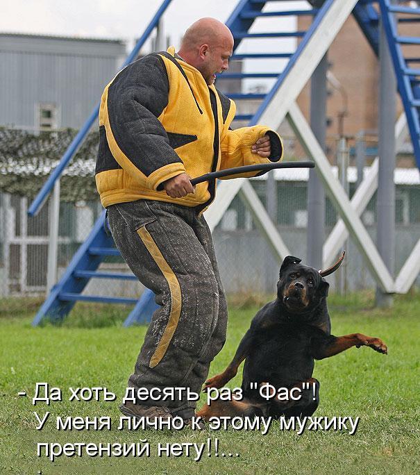 Забавные и смешные фото животных с надписями - смотреть бесплатно 2