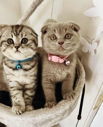 Забавные кошки фото, смешные и ржачные картинки котов 1