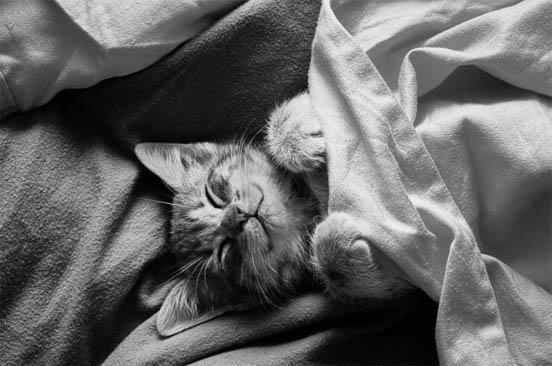 Забавные кошки фото, смешные и ржачные картинки котов 12
