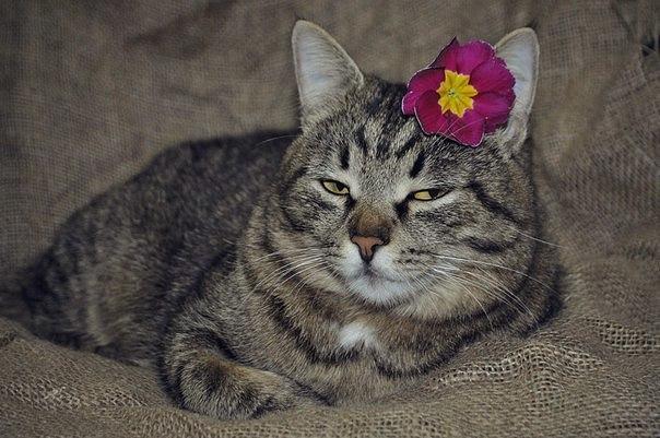 Забавные кошки фото, смешные и ржачные картинки котов 14