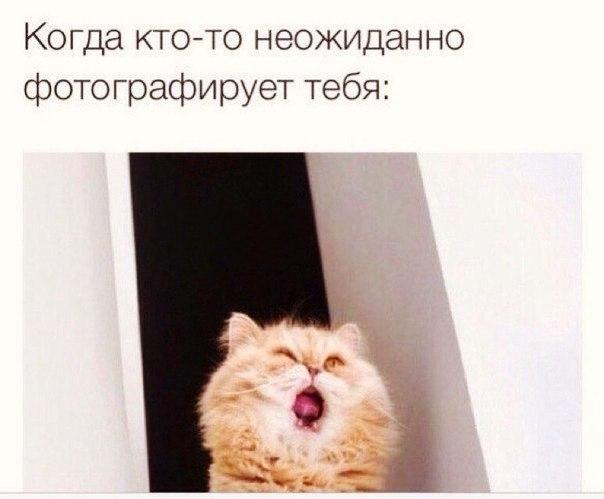 Забавные кошки фото, смешные и ржачные картинки котов 2