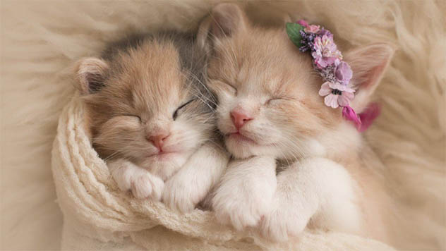 Забавные кошки фото, смешные и ржачные картинки котов 3