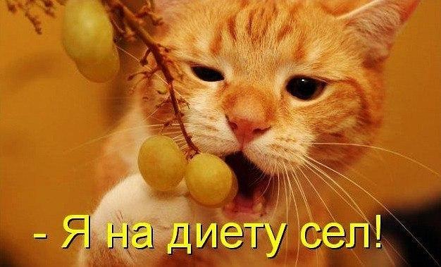 Забавные кошки фото, смешные и ржачные картинки котов 4