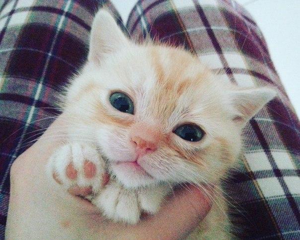Забавные кошки фото, смешные и ржачные картинки котов 8
