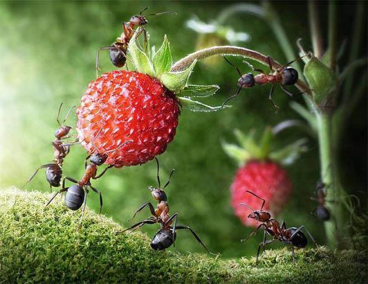 Как вывести муравьев из дома - быстро в домашних условиях 3