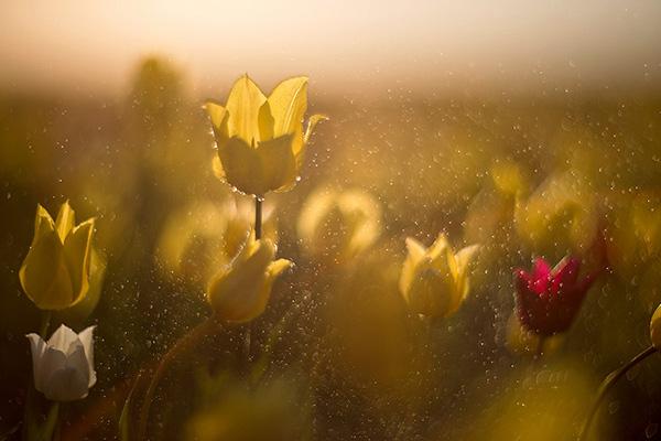 Красивая и удивительная природа земли - смотреть фото и картинки 15