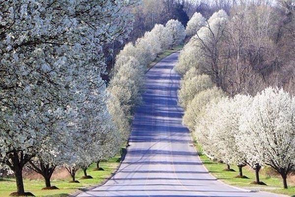 Красивая и удивительная природа земли - смотреть фото и картинки 2