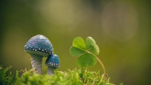 Красивая и удивительная природа земли - смотреть фото и картинки 5