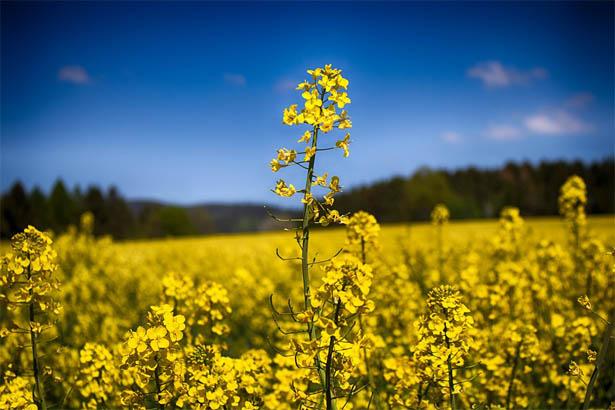 Красивые и удивительные картинки, фото весны - смотреть бесплатно 10