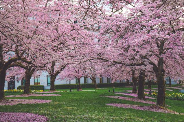 Красивые и удивительные картинки, фото весны - смотреть бесплатно 13