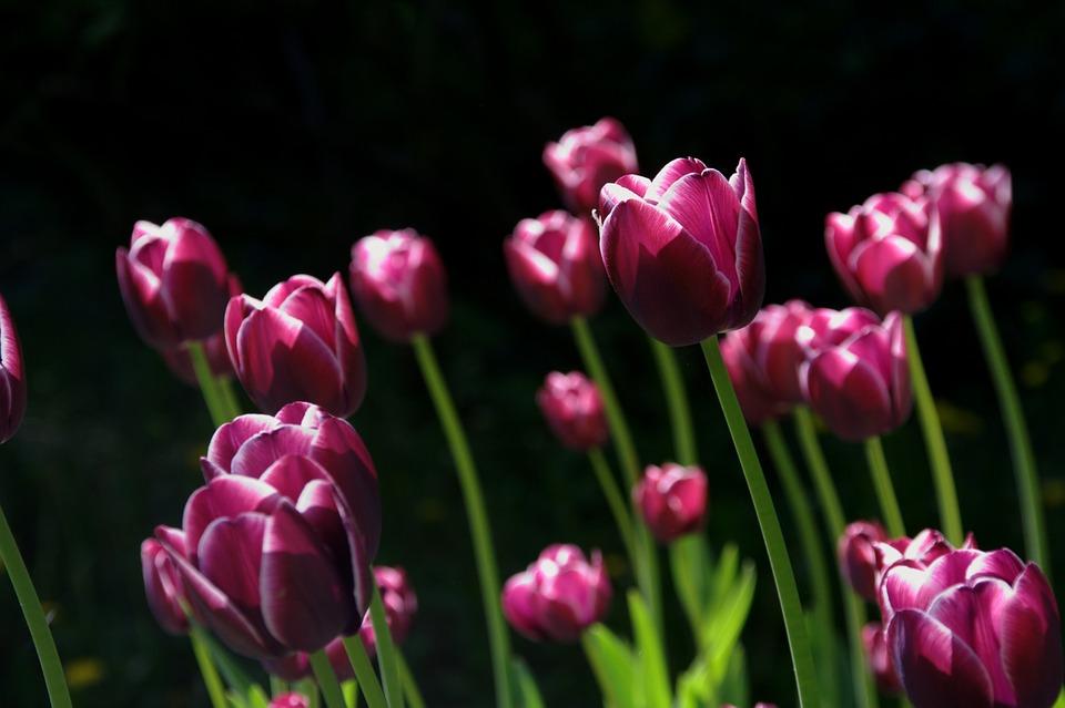 Красивые и удивительные картинки, фото весны - смотреть бесплатно 14