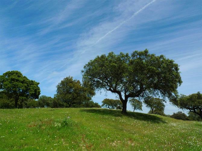 Красивые и удивительные картинки, фото весны - смотреть бесплатно 15