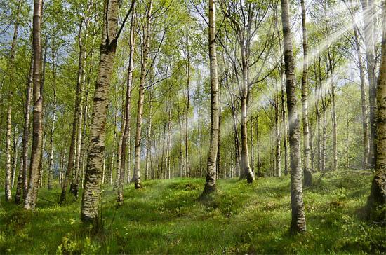 Красивые и удивительные картинки, фото весны - смотреть бесплатно 7